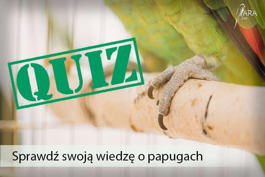 quize o papugach